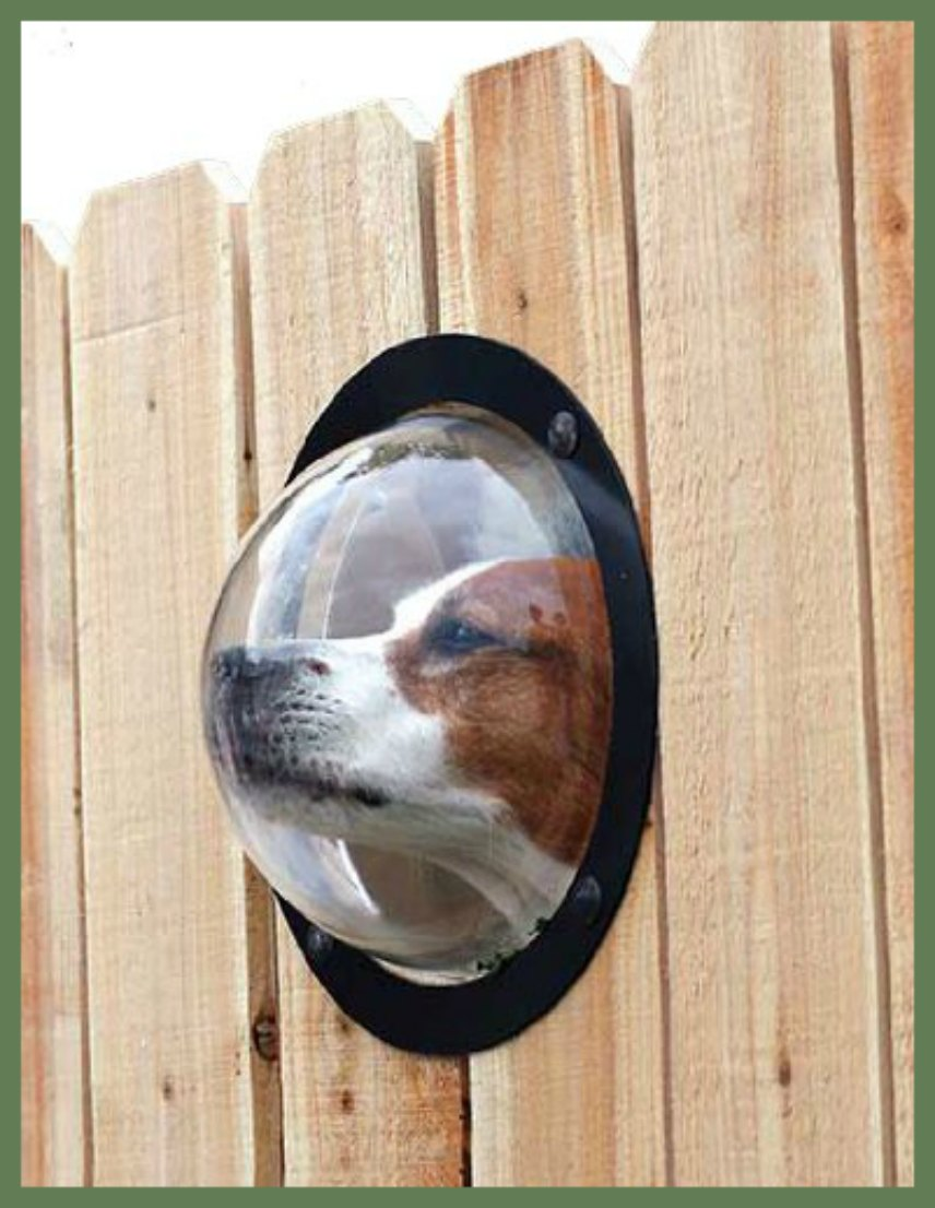 Dog Window Fence