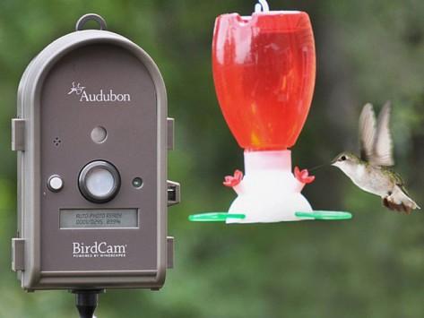 bird watching camera